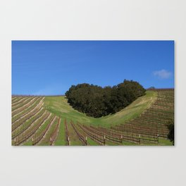 Valentines Day - Winery - Paso Robles Canvas Print
