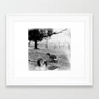 ducks Framed Art Prints featuring ducks by marco.ficcadenti