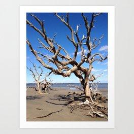 Driftwood Beach Art Print