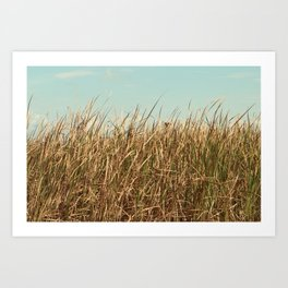 Texas Prairie Grass Art Print