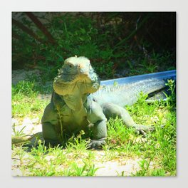 Iguana and Chill Canvas Print