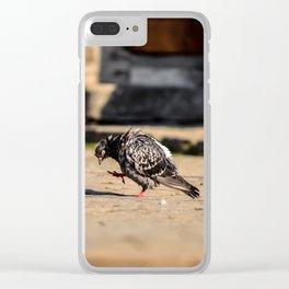 Dove in the Sun Clear iPhone Case