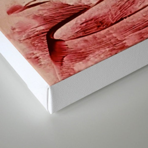 Red Alienlandscape Canvas Print