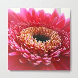 Red Germini Close up Metal Print