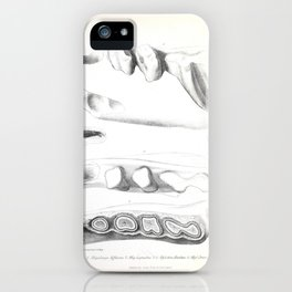 The Zoology of the Voyage of H.M.S. Beagle 1840 - Fossil Mammalia - Various Jaws and Teeth iPhone Case