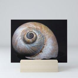 Moon snail sea shell 2863 Mini Art Print