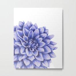 Big flower, purple chrysanthemum Metal Print