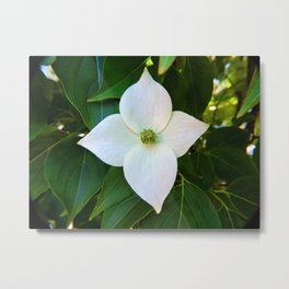 Kousa Dogwood Flower Vertical Metal Print