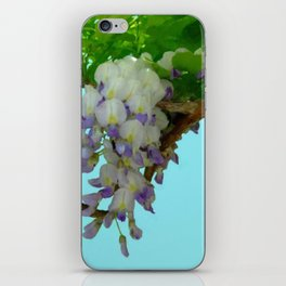 Wisteria on the Vine iPhone Skin