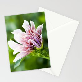 Cafe Au Lait Dahlia in Bloom Stationery Cards