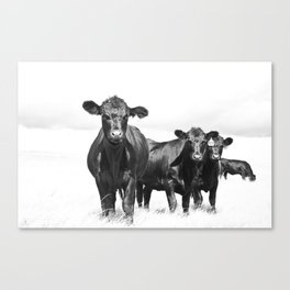 Cattle Country Photograph Canvas Print
