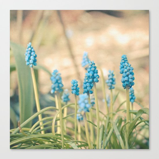Forest of Blue Canvas Print