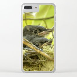 Steller's Jay Babies Clear iPhone Case