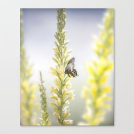 """""""Butterfly and Flowering Shindagger"""" by Murray Bolesta! Canvas Print"""