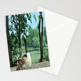 Deluxe Ducks #16 Stationery Cards