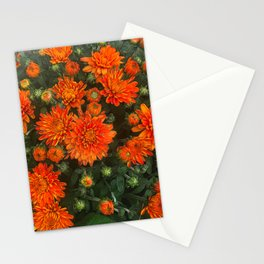 Orange Fall Mums Stationery Cards