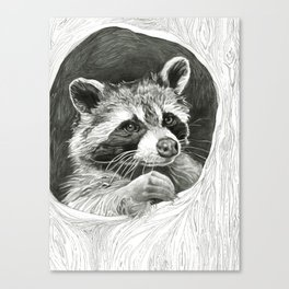 Raccoon In A Hollow Tree Drawing Canvas Print