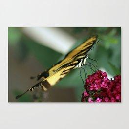Swallowtail on Butterfly Bush Canvas Print