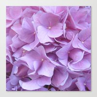 hydrangea Canvas Prints featuring Hydrangea by lillianhibiscus