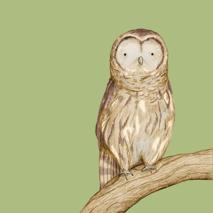 Tawny Owl Comforters