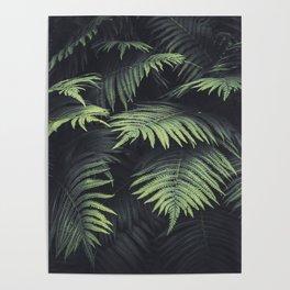 Beautiful Ferns Poster