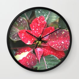 Raindrops on a poinsettia Christmas flower Wall Clock
