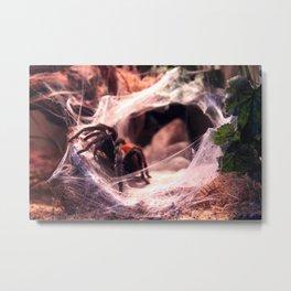 Lady Tarantula Metal Print