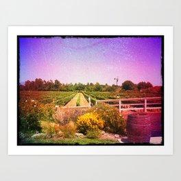 Santa Barbara Vineyard Farm Art Print