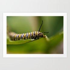 Bookworm - Monarch Caterpillar Larvae Art Print