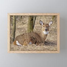 Oh Deer Framed Mini Art Print