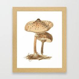 Agaricus Procerus Framed Art Print