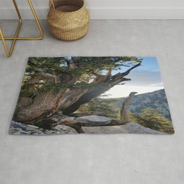 Ancient Bristlecone Pine Forest #3 Rug