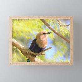 Sunshiny  Roller Bird by Reay of Light Photography Framed Mini Art Print