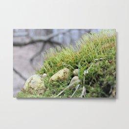 Moss & Rocks Metal Print