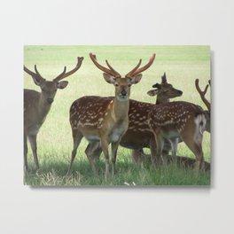 Axis Deer Metal Print