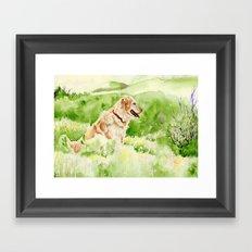 Golden Retriever Chance Framed Art Print