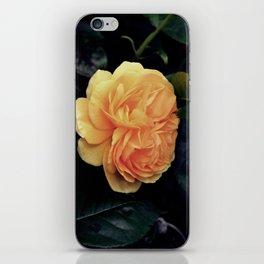 Yellow Rose iPhone Skin