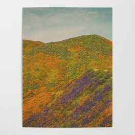 California Poppies 021 Poster