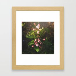 Appletree Blossom Framed Art Print