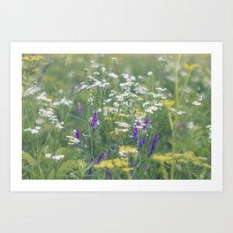 Where the Wildflowers Grow Art Print