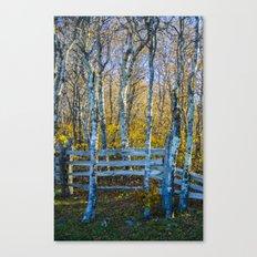 Two birches Canvas Print