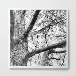 Okanagan Series Metal Print