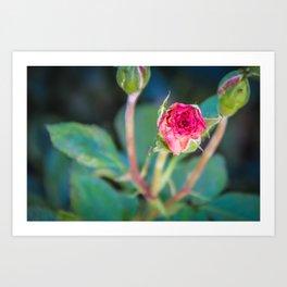 """Rose Bud"" Art Print"