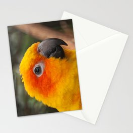 Sun conure parrot Stationery Cards