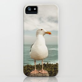 Feathered Resident La Jolla California iPhone Case