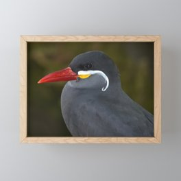 Handsome Inca Tern Framed Mini Art Print