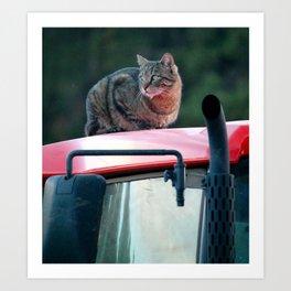 Tractor Cat Art Print
