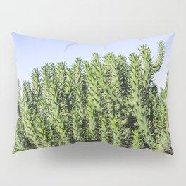 Cactus Photography - Green Cactus Decor - Cacti Art Pillow Sham
