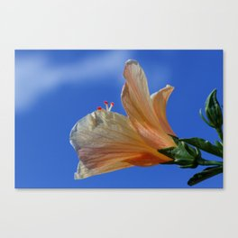 Yellow Hibiscus In The Sun Canvas Print