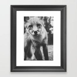 FOXY IV / Alaska Framed Art Print